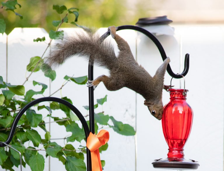 Decorative Shepherd Hooks – What A Backyard Needs!